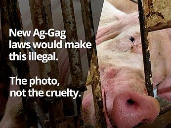 'Ag-gag' laws expose Coalition's freedom of speech hypocrisy