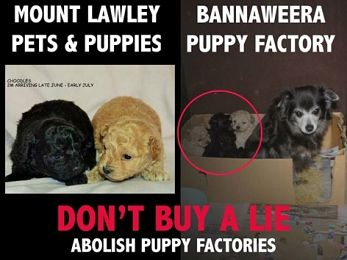 Puppy factories and the RSPCA