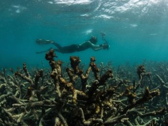 The Australian's Great Barrier Reef editorial: A misrepresention of science
