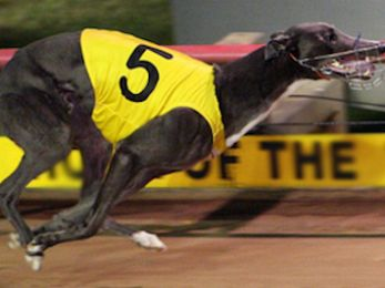 Greyhound racing ban: Worthy of bipartisan support