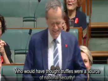 Shorten's zingerthon nails Turnbull's continuing cluster cock-ups. Masterful!