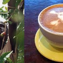 Combating child slavery in coffee and chocolate trade