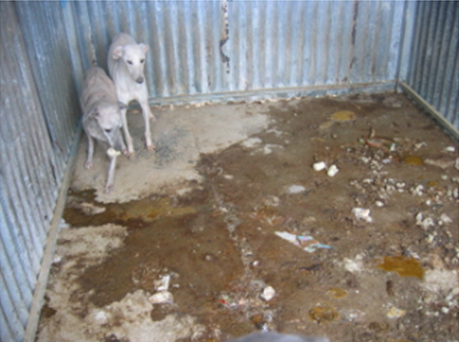Are puppy farms considered factory farms?