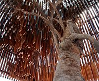 The remains of the Tree of Knowledge, Barcaldine after it was cruelly poisoned.