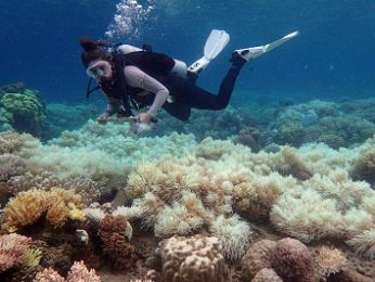 The uncomfortable truth: The Great Barrier Reef is doomed