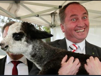 Barnaby Joyce and dual citizenship: 'It's the vibe'