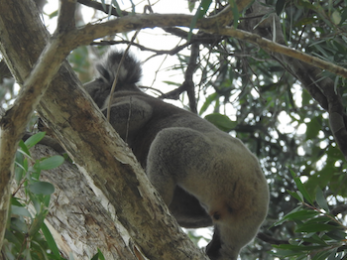 Koala deathtraps, Roads and Maritime Services and censorship