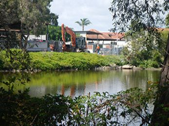 Destruction of Black Swan Lake angers Gold Coast residents