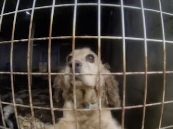Animal cruelty crosses borders ahead of puppy farm legislation