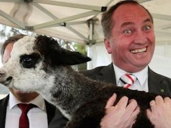 Barnaby Joyce, NEG, coal and general nutcase stuff