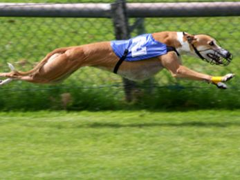 Time's up for greyhound racing in NSW