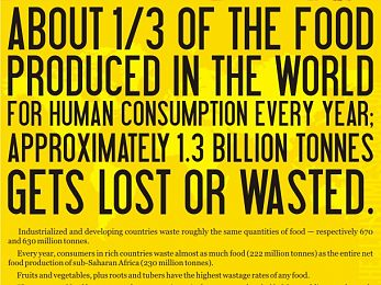 Food waste and hunger side-by-side