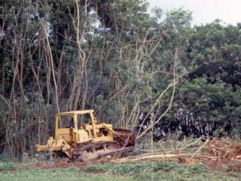 NSW Government clears way for widespread woodland devastation