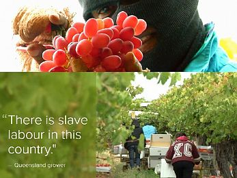 Coles, Woolworths, slavery and the global free market outsourcing racket