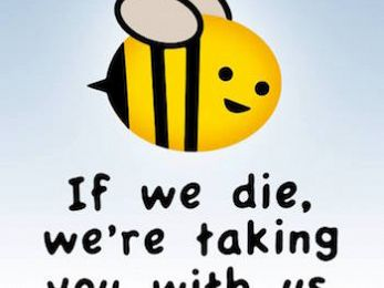 Australia's complacency in the face of worldwide bee decline