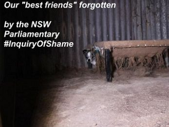 Baird Government Puppy Farm Inquiry entrenches animal cruelty in NSW