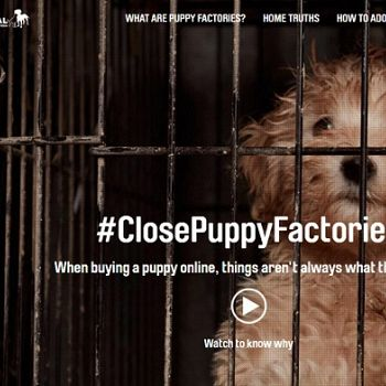 NSW Government and RSPCA join forces to hoodwink public over puppy factories