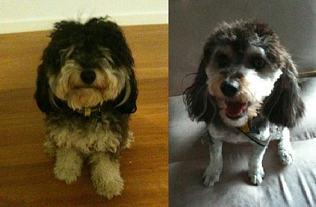 Getting your long-haired pooch clipped over summer will make them much happier.