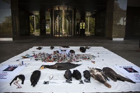 Native waterbirds and corpses and cartridge cases placed by the Coalition of Duck Shooting on the Parliament House portals.