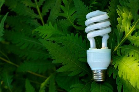 lightbulb with green 87657346