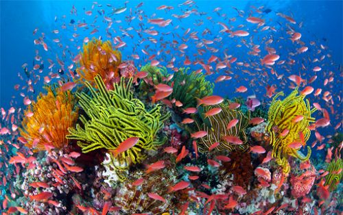 go ahead for mega coal mine threatens the great barrier reef and the