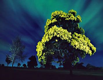 Wattle you be doing on National Wattle Day?