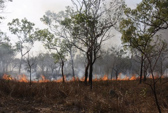 Bushfire-ravaged communities take future into own hands