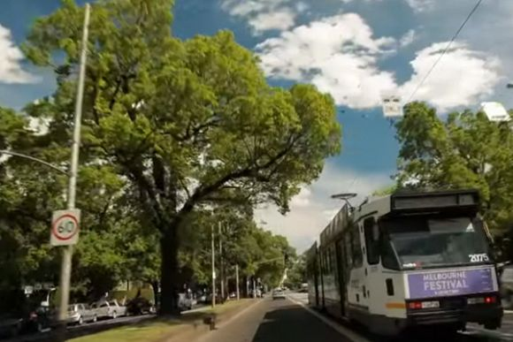 United we stand: Urban trees face an existential crisis