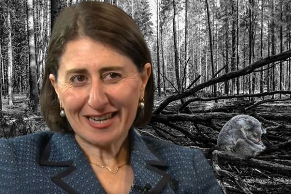 Can the koala survive in Berejiklian's NSW?