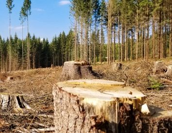 Renewable energy industry runs roughshod over forests
