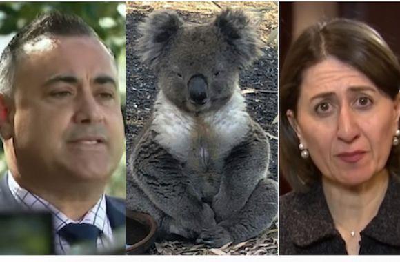 Barilaro's gift to the koala