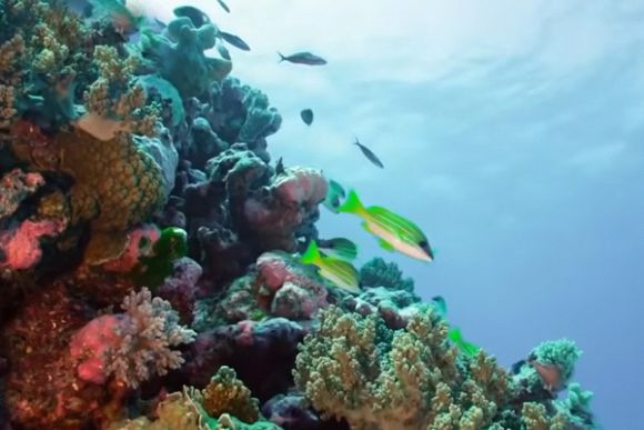 Australia still falling behind in marine area protection