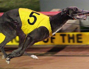 Greyhound racing ban: Worthy of bipartisan support