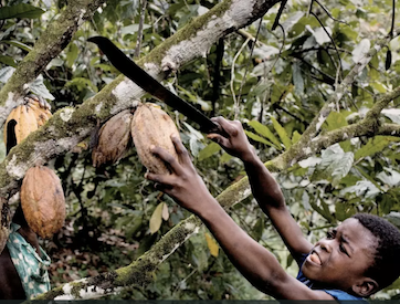 child slavery in the chocolate industry