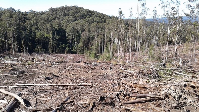 Forests, logging and climate change