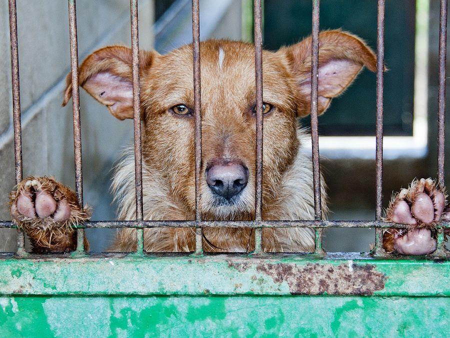 Shifting politics: respecting the welfare of animals