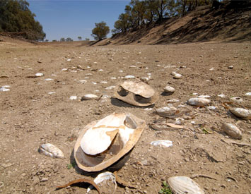 Government needs to act on Menindee and Darling disasters
