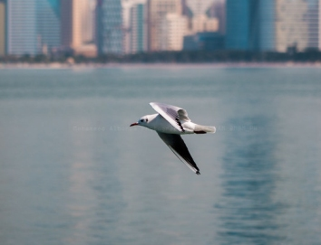 Drones killing birds: What can be done?