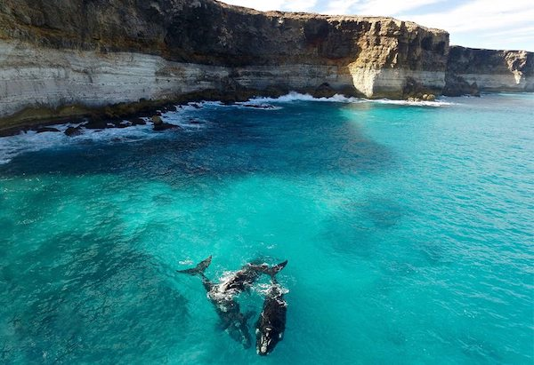 Accident-prone oil industry to drill Great Australian Bight