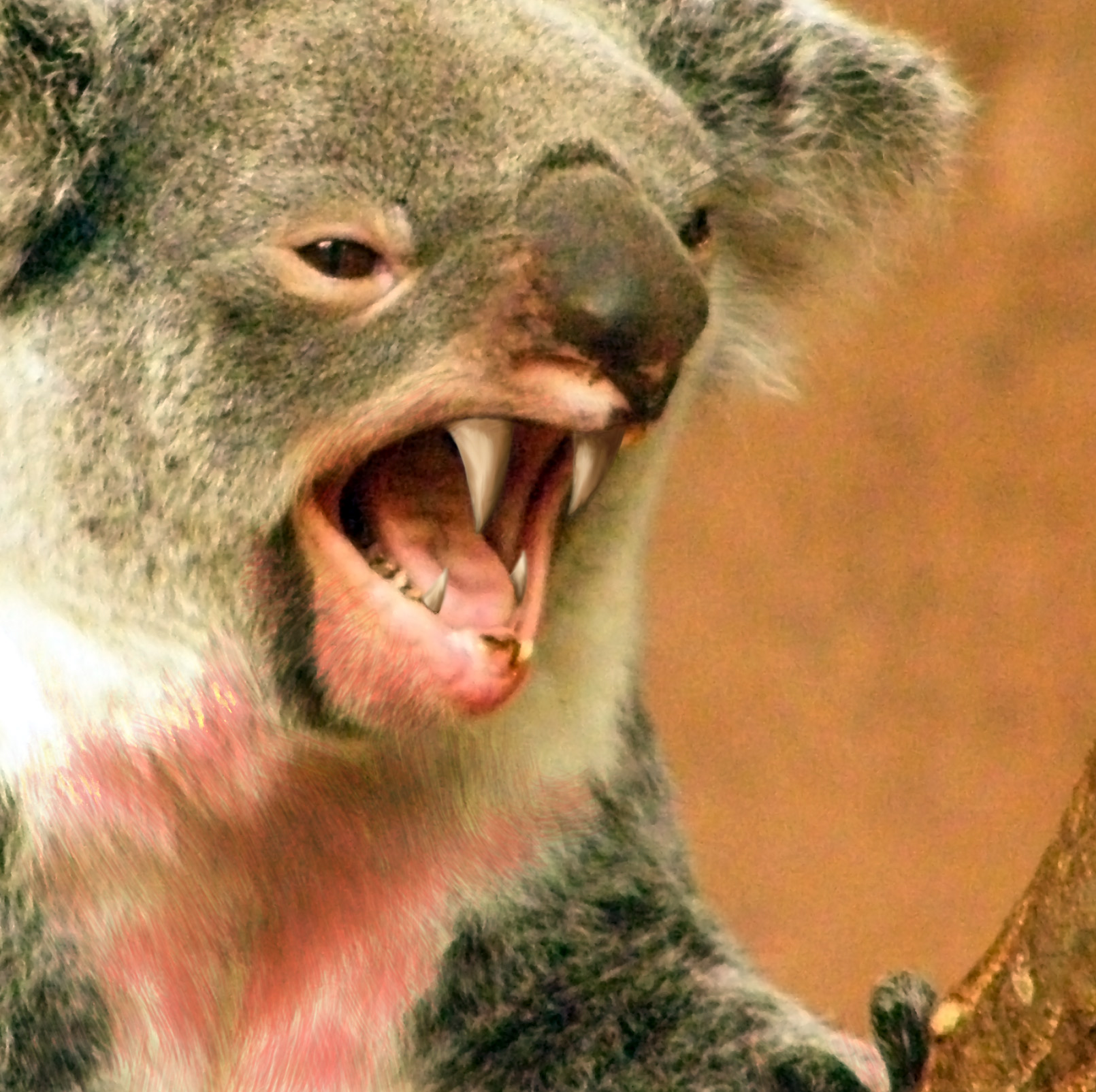 #7 TOP IA STORY OF 2020: Drop Bears feared extinct due to Australian bushfires